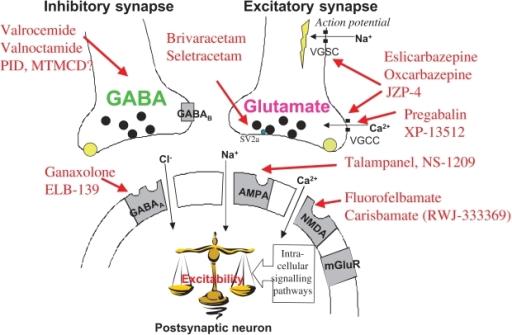 gabapentin mechanism of actions